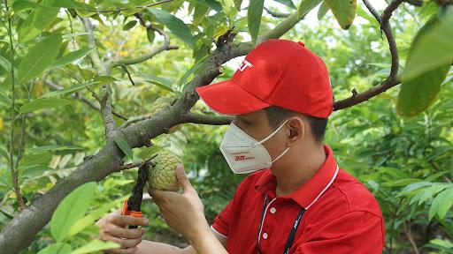 J&T Express hỗ trợ vận chuyển và tiêu thụ  trái cây giúp nhà nông tại Hưng Yên